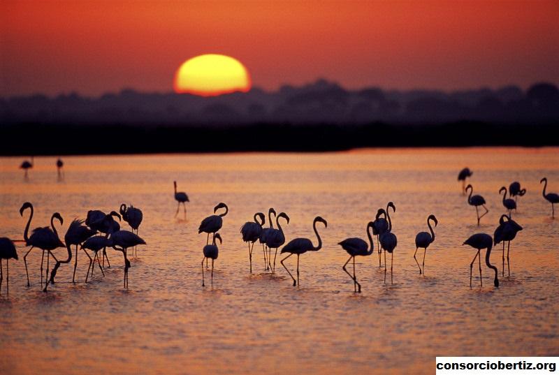 Taman Nasional Doñana, Taman Wisata di Spanyol